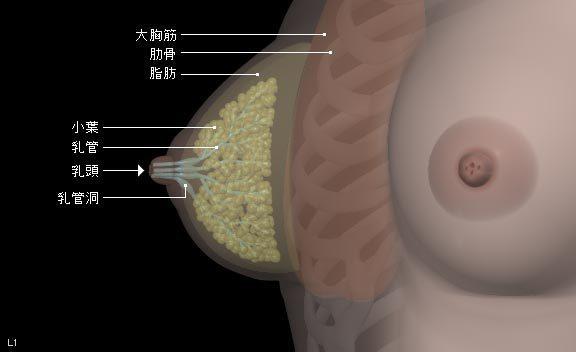 breast01.jpg